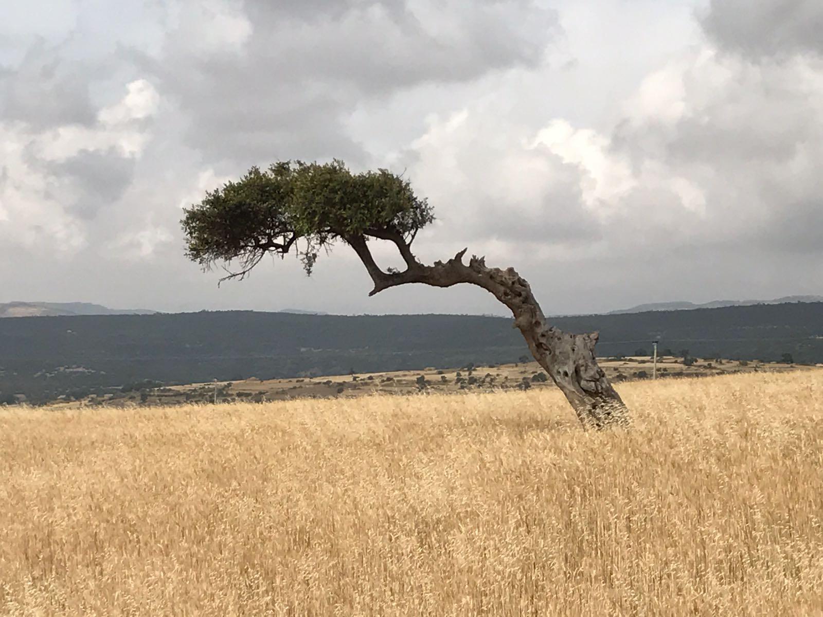 A Recent Visit to Ethiopia